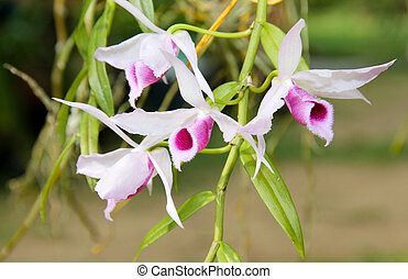 wild orchid I