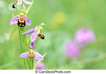 wild orchid in meadow