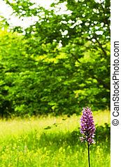 Wild orchid portrait