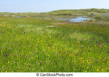 Wild orchids in landscape
