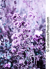 Wild oregano flowers in a summer meadow. Colored photo
