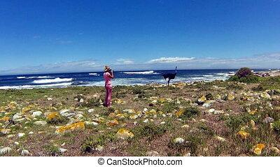 Wild Ostrich Cape Peninsula - A Wild Ostrich along the...