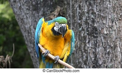 Wild Parrot on Perch