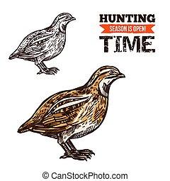 Wild partridge bird color sketch