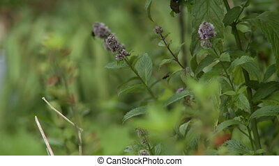 Steady, close up shot of wild perennial flowers in the woods.