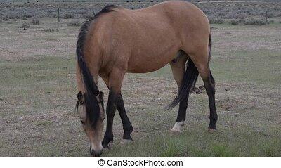 wild, pferden,  Wyoming