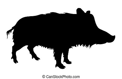 Wild pig - Vector illustratin od wild pig silhouette