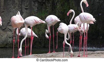 Wild Pink Flamingos At Nature Reserve