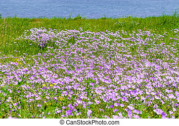 wild pink flowers in green grass meadow