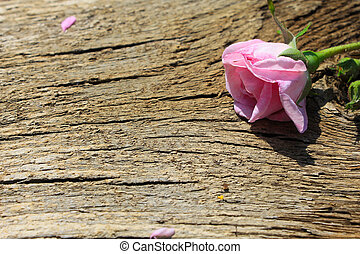 Wild pink rose on wooden background