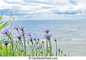 Wild plant of Siberia, Alpine Aster ( Aster alpinus L. ) -...