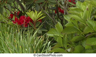 Wild Plants and Red Flowers