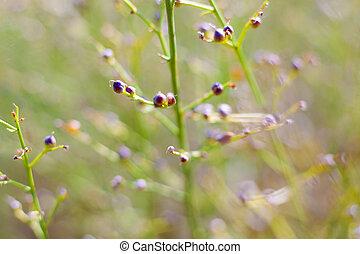 Wild plants in a meadow