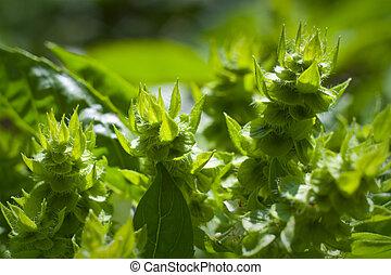 Wild plants on a meadow