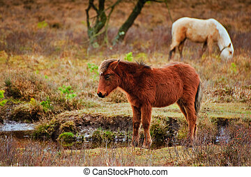 Wild pony at edge of stream in forest during Winter Autumn Fall