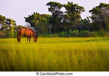 wild,  pony
