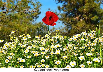 spring flowering in the Lower Galilee, Israel