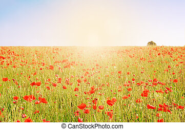 Wild Poppy Field with Tree and Sunlight