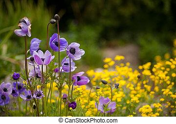Wild purple and yellow flowers