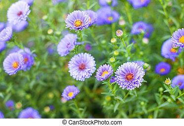 wild purple flowers in the field