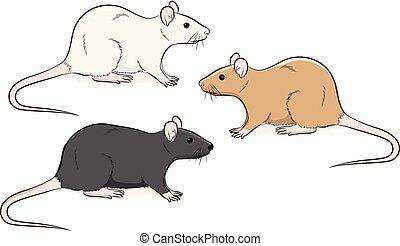 Wild Rat Vector Illustration