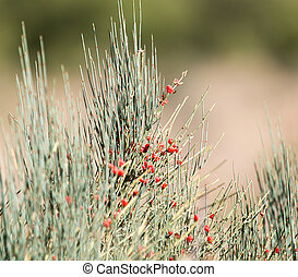 wild red berries on a bush