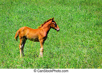 Wild red horse on a green background, lamb graze in the Meadow