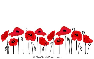 Wild red poppies in a row. Isolated on white background.