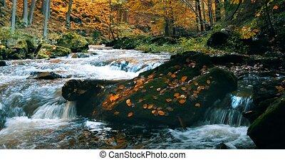 wild river Doubrava in fall colors, autumn landscape -...
