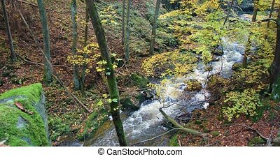 wild river Doubrava in fall colors, picturesque landscape -...