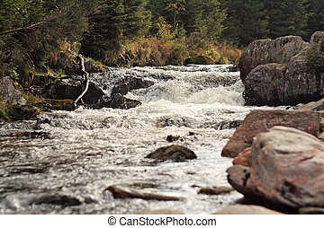 wild river in the forest, rapids and rocks