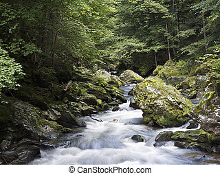 wild river with mossy stones
