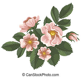 Wild rose - Branch of pink wild rose, painted in vintage ...