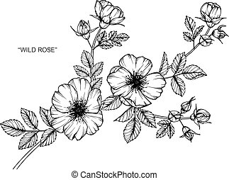 Wild rose flower drawing and sketch with black and white vectors wild rose flower drawing and sketch with black and white line art mightylinksfo Image collections