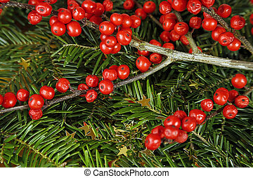 wild rose fruits, golden stars and fir tree. christmas background