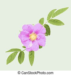 Wild rose isolated on green  background. Vector illustration.