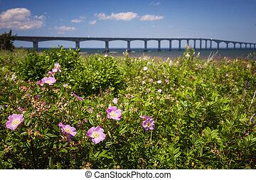 Wild roses at Confederation Bridge
