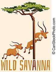 Wild savanna with deer and tree