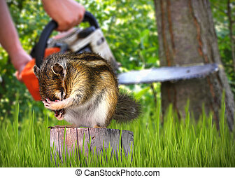 wild scared chipmunk and deforestation on background, nature destruction concept