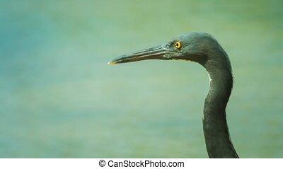 Wild Sea Bird in Thailand Posing for the Camera - Video...