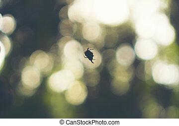 wild spider in the forest