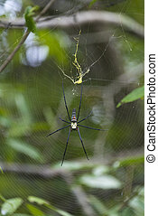 wild spider in tropical forest