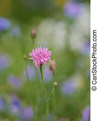 wild spring flowers