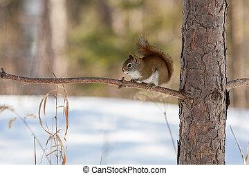 Wild Squirrel - A wild squirrel looks inquisitively in ...