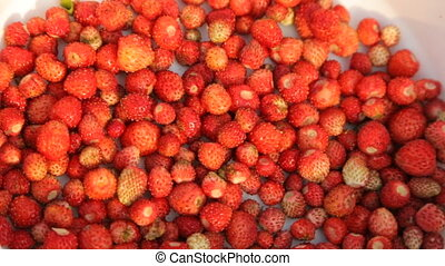 Wild strawberries on plate in closeup