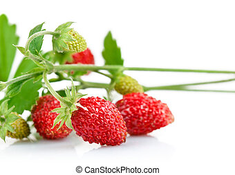 wild strawberry berry with green leaf