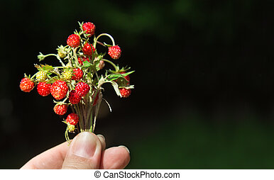 Wild strawberry in woman's hand