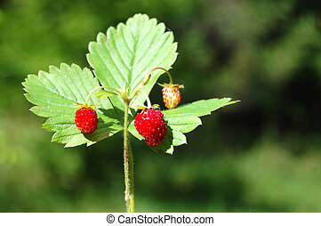 Wild strawberry on a green background