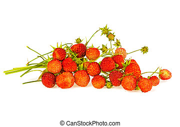 Wild strawberry on a white background