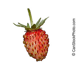 Wild strawberry on a white background.
